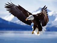 Eagle ready to fish!