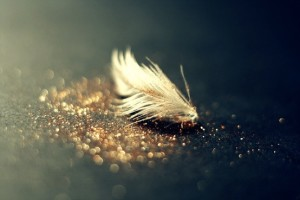 Feathers and fairy dust