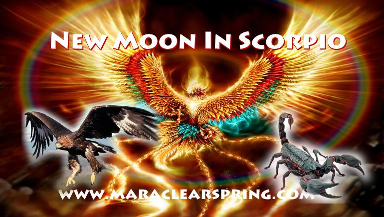 New Moon In Scorpio Part 3: The Phoenix Rises! - Mara Clear Spring ...