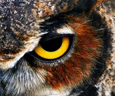 Owl Eye by D Mangus from Flickr