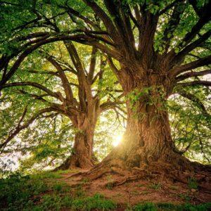 ONline Second Step Shamanic Training heart healing shamanic circle