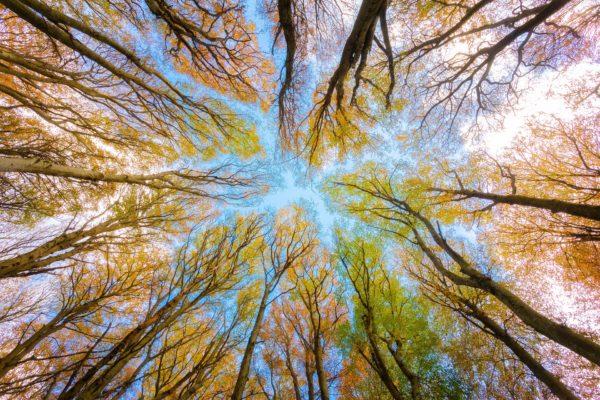 Heart Clearing and Healing Trees by Genarro Leonardi on Pixabay