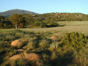 Wright's Field by Jon Green
