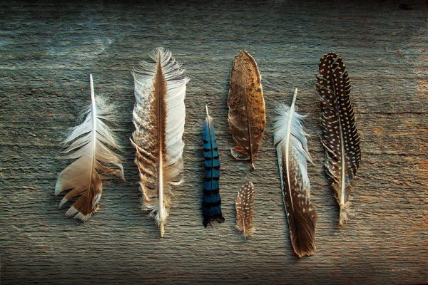 Mercurial Moves Feathers